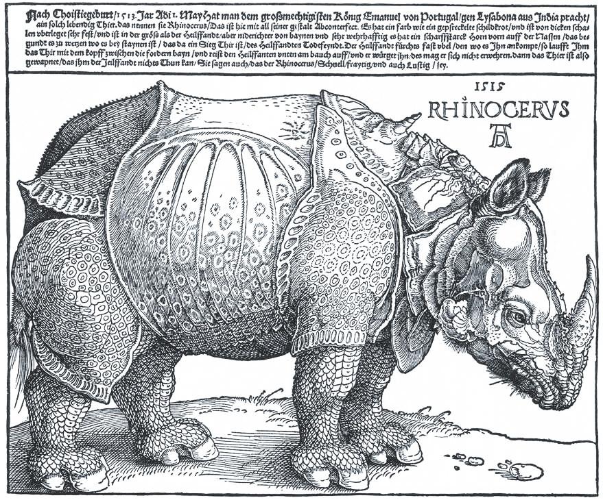 Rhinocerus nashorn