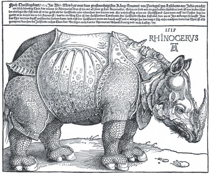 Rhinocerus (Nashorn) - Albrecht Dürer